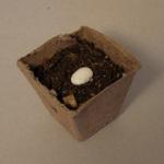 box_dirt_seed
